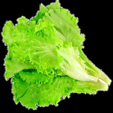 Lechuga italiana verde